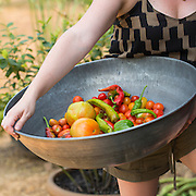 Product  photography for shop.pallen.com at  P. Allen Smith's Moss Mountain Farm  on Tuesday, June 30, 2015, in Roland, Arkansas.