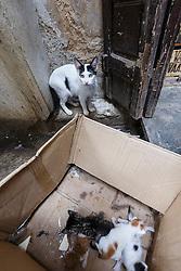 Cats sleeping in box, Fes al Bali medina, Fes, Morocco