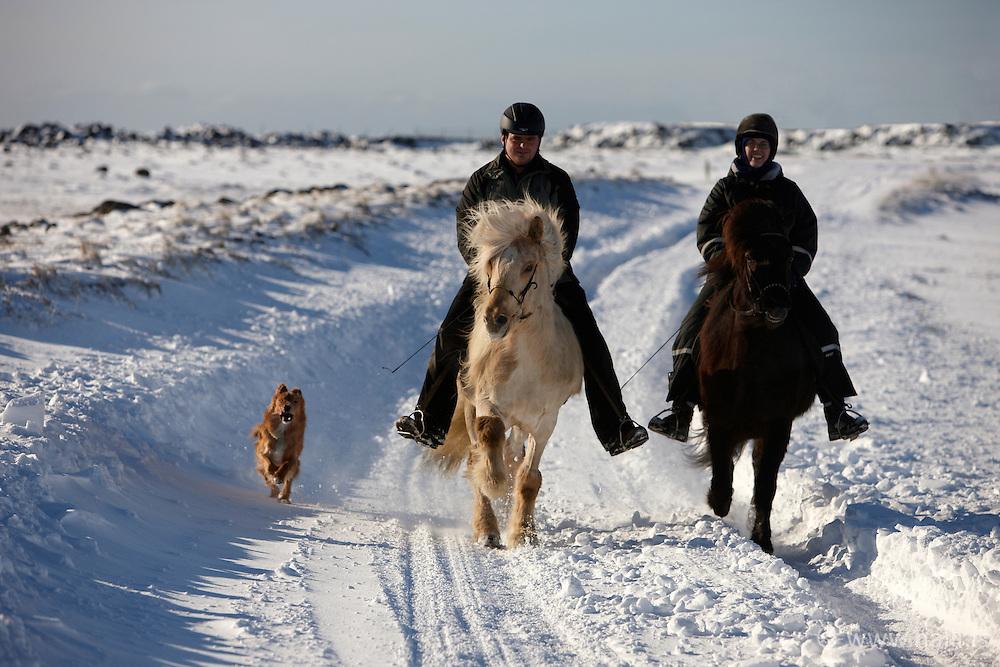 People riding horses in snow and cold in Thorlakshofn, Iceland - Hestamenn í Þorlákshöfn