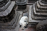 A white dog lies curled up between stone pagodas at Swayambhunath temple in Kathmandu, Nepal.