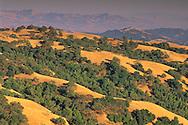 Oak trees and grass hills along Palassou Ridge, Santa Clara County, California