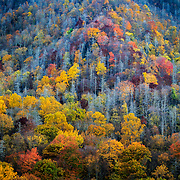 Peak fall colors along the ridges of the Great Smokey Mountains near the town of Asheville, North Carolina.
