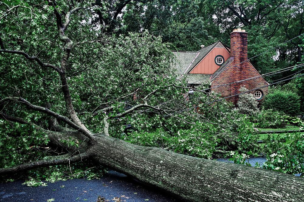 Hurricane tree damage, Hurricane Irene 2011, Moorestown, New Jersey, USA.