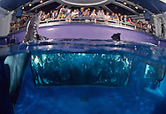 Marine Mammal Research lab where visitors can observe on two levels. Bottlenose Dolphin with a rescue dog that became the teams mascot while in training.  The Living Seas, EPCOT, Buena Vista, Florida