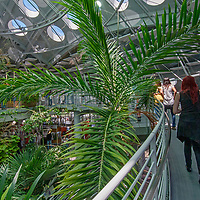 Visitors walk along catwalks under a large dome enclosing the Osher Rainforest Exhibit at the California Academy of Sciences in Golden Gate Park, San Francisco, California.
