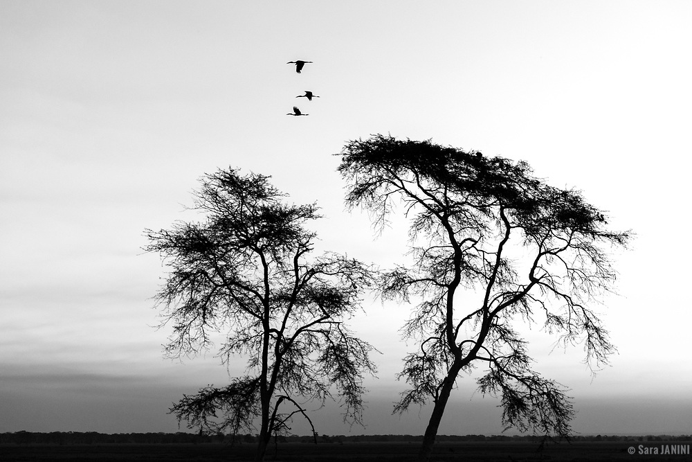 Gorongosa N.P., Mozambique, Africa