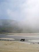 View of Purakaunui Bay on foggy day when the air was moist and the sea cold; The Catlins, Southland, New Zealand