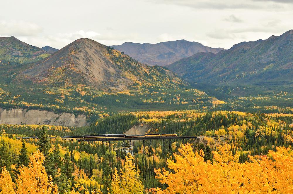 Alaska Railroad Passanger train crosses the Nenana River during the prime fall colors in Denali National Park