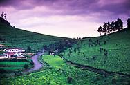 A road winds through a tea estate in Tamil Nadu, India.