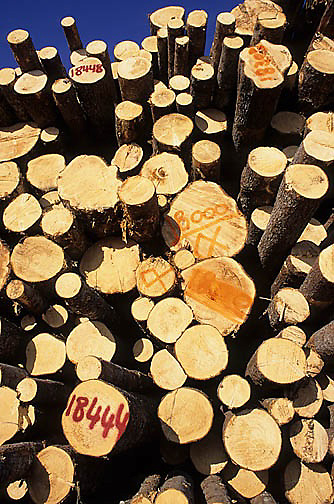 Industry, Logged timber at lumber yard from Chugach National Forest. Homer. Alaska.