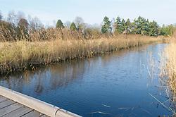 Bussums Bloei, Bussum, Gooise Meren, Noord Holland, Netherlands