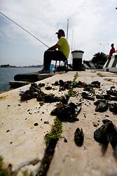 """Sulla banchina del porto di Brindisi, alcuni pescatori occasionali stanno impostando una battuta di pesca alle orate e saraghi. Questi """"sparidi"""" sono molto ghiotti di molluschi come cozze, fasolari, cannolicchi ecc. Questo tipo di pesca viene effettuata con canne lunghe circa 4 - 4,20 m innescando sugli ami appunto questi molluschi."""