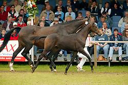 060-Akunora<br /> KWPN Paardendagen 2005<br /> Photo © Hippo Foto