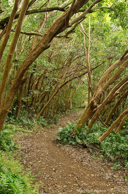 Kuamo'o-Nounou Trail, Kauai, Hawaii
