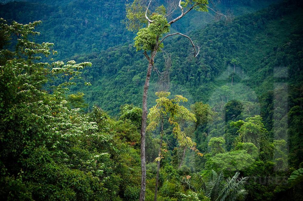 Jungle in Khanh Hoa province, Vietnam, Asia2011