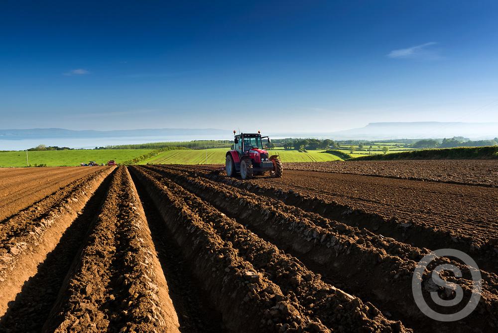 Photographer: Chris Hill, Potato Planting, Limavady, County Derry