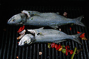 Freshly caught fish on the bbq grill at summer home on Martha's Vineyard, Massachusetts.