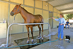 Evelyn Hanggi Washing Horse