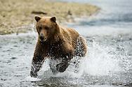 Destination Alaska workshop program in Katmai National Park in Alaska. ©Brett Wilhelm