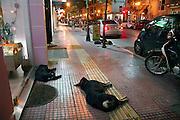 Griekenland, Volos, 5-7-2008Honden liggen op straat te slapen. In Griekenland zijn overal zwerfhonden, vaak in een roedel. Ze worden veelal met rust gelaten en soms gevoed. Ze zijn vast onderdeel van het straatbeeld.Foto: Flip Franssen