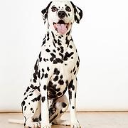 20160605 Dogs-Martha