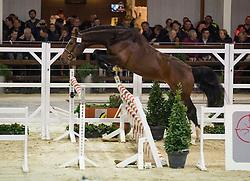 051, Moritz van de Riethoeve<br /> BWP Hengsten keuring Koningshooikt 2015<br /> © Hippo Foto - Dirk Caremans<br /> 21/01/16