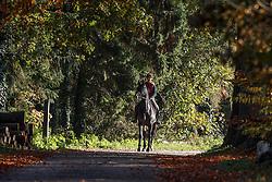 Meiresonne Delphine, (BEL), Corlandus CD<br /> La Grange - Massenhoven 2015<br /> © Hippo Foto - Dirk Caremans<br /> 31/10/15