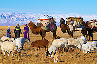 Mongolie, Province de Khovd, campement des nomades, transhumance, déménagement à dos de chameau, caravane des chameaux // Mongolia, Khovd, nomad camp, transhumance, moving on the back of the camels, caravan of the camels