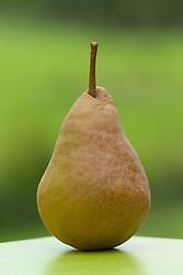 Pear - Pyrus communis 'Durondeau'