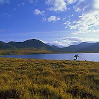HIKING, Jill Matlock (MR) runs in tundra by remote lake, Logan Mts.,Yukon Territory, Canada