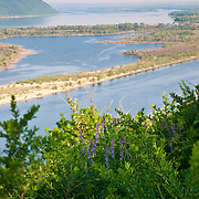 Flowers with violet petals on the Volga river bank near Zhiguli mountains