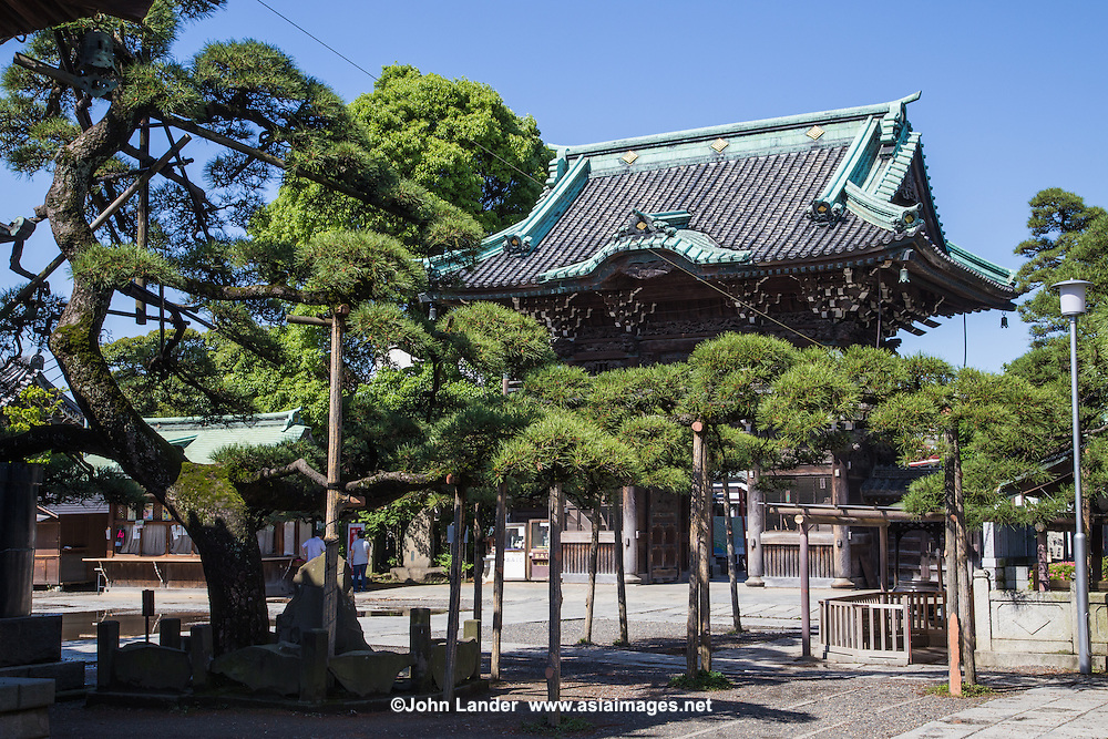 """The pine tree of Shibamata Taishakuten is called Zui-ryū-no-matsu or """"lucky dragon pine"""" which is more than 400 years old with branches that extend up to 40 meters long.  It is said that the monks fertilize the tree with sake or rice wine to enhance its growth."""