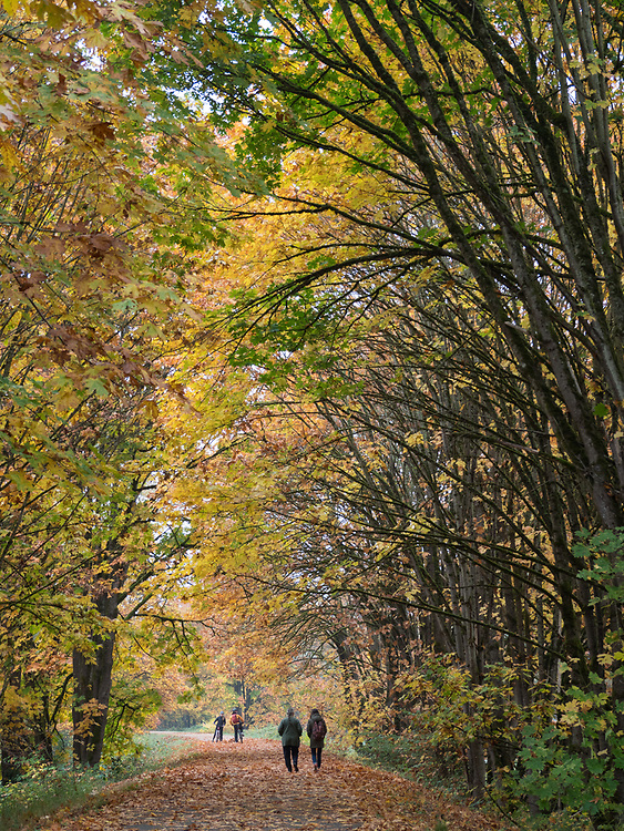 United States, Washington, Snohomish, walkers and bicycle riders on Centennial Trail in fall