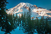 Mt Rainier at dusk with snowladen trees in the foreground, from Pinnacle Saddle