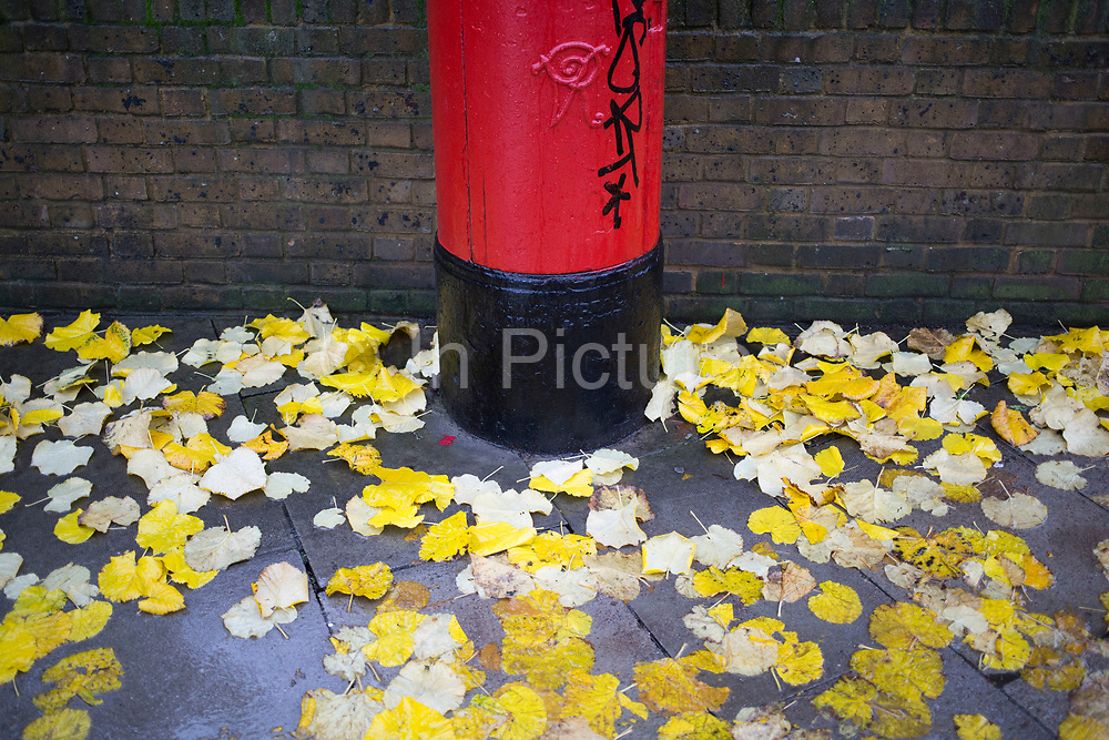 Yellow Autumn leaves fall and stick to the ground beside a red post box on a wet rainy day in Whitechapel, East End of London, UK.