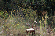 abandoned chair in green brush