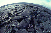 Lava field, Kilauea Volcano, Island of Hawaii<br />