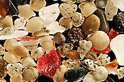 [Digital focus stacking] Abraded calcareous sand sample, Sulawesi, Indonesia. Diagonal of frame approx. 6 mm | Abgerollter Kalksand mit ebenfalls abgerollten Vulkanasche-Stückchen, Sulawesi, Indonesien. Bilddiagonale ca. 6 mm
