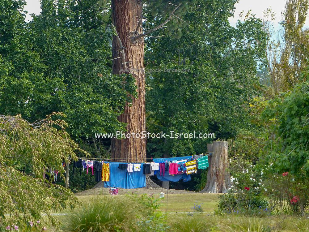 Washing line in a remote farm, South Island, New Zealand