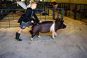 16 JULY 2020 - BOONE, IOWA: on the first day of the Boone County Fair in Boone. Summer is county fair season in Iowa. Most of Iowa's 99 counties host their county fairs before the Iowa State Fair. In 2020, because of the COVID-19 (Coronavirus) pandemic, many county fairs were cancelled, and most of the other county fairs were scaled back to concentrate on 4H livestock judging. Boone county scaled back its fair this year. The Iowa State Fair was cancelled completely.             PHOTO BY JACK KURTZ