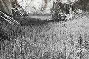 Yosemite Valley after a winter storm, Yosemite National Park, California USA