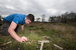 RSPB staff member attempting to lure a cricket from its burrow, part of Field cricket Gryllus campestris translocation project, RSPB Farnham Heath Nature Reserve, Surrey, April