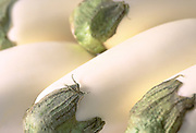Close up selective focus photograph of a group of white eggplants