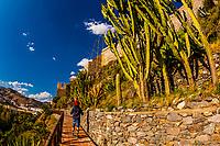 Cactus Garden, Castillo San Miguel, Almunecar, Costa Tropical, Granada Province, Andalusia, Spain.
