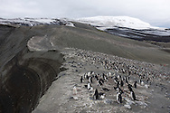 Chinstrap penguins on beach at Bailey's Head, Antarctica  20090101 ()