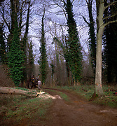 A01XDC Sequence of nine Man cutting down an ash tree in English woodland