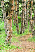 trees in a forest. Photographed in Armenia