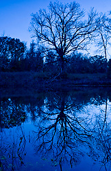 Stock photo of a tree and reflection in a pond with very blue light